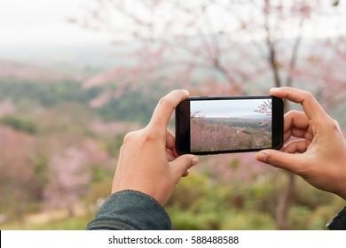 tourist holding phone mobile taking photo cerasoides tree