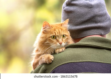 tourist man in a hat hugs a fluffy red cat with bright sun glare