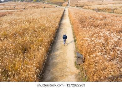 A tourist man run in Haneul park in Seoul, Korea