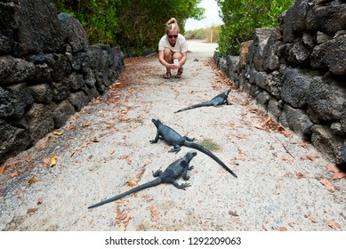A tourist observes juvinile marine Iguanas in the Galapagos