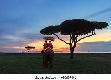 Tourist on elephant sightseeing in Phuket