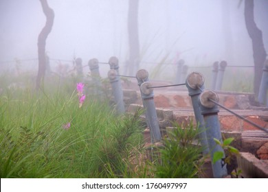 Tourist path in the fields of Krachiew flowers in the  morning mist,selective focus