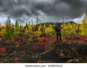 Tourist photographer takes picture autumn landscape in Dead Forest Dead Wood - consequence of natural disaster - catastrophic eruptions volcano. Tolbachik Volcano, Kamchatka Peninsula, Russia