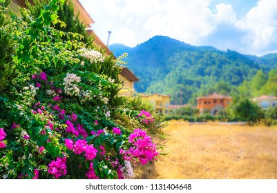 Tourist Riviera with flowering plants, sun and hotels on the background of wooded mountains