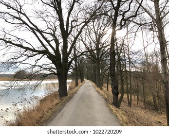 Tourist road at near pond with trees
