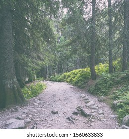 Tourist route in the pine forest, mountain landscape, natural vintage travel background, High Tatras, Slovakia (Slovensko)