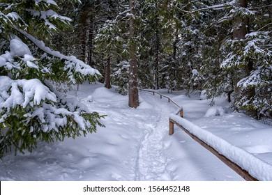 Tourist route in snowy winter pine thee forest, beautiful nature, outdoor travel background, Jasna ski resort, Slovakia (Slovensko)
