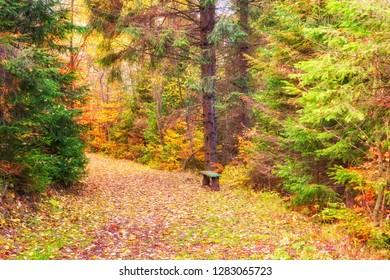 Tourist route in sunny autumn forest, wild nature, outdoor travel background, National park Slovak paradise (Narodny park Slovensky Raj), Slovakia (Slovensko) - Shutterstock ID 1283065723