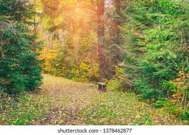 Tourist route in sunny autumn forest, wild nature, outdoor travel background, National park Slovak paradise (Narodny park Slovensky Raj), Slovakia (Slovensko) - Shutterstock ID 1378462877