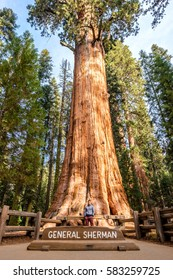 Tourist in Sequoia National Park in front of the largest tree in the world - General Sherman tree. California, United States.