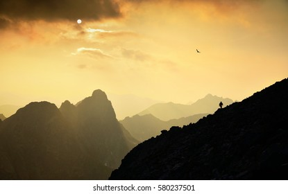 Tourist silhouette who hike in high mountains during sunset - wild bird flying over him