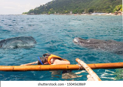 Tourist snorkeling in the open sea with whale sharks near the town of Oslob on Cebu island, Philippines. Popular travel attraction the diving and watching the feeding of sharks in nature.