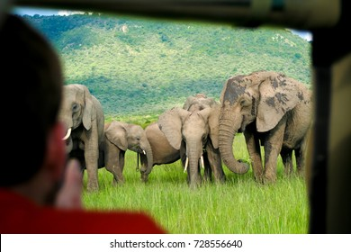 A tourist takes photos of elephants out the window of a vehicle