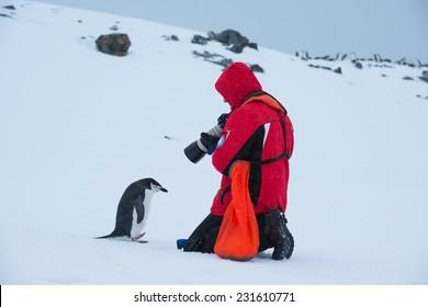 Tourist taking photo of Chinstrap penguin, Antarctica