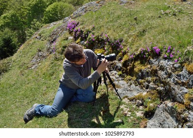 A tourist is taking photo the spring violet flowers on the green slope.