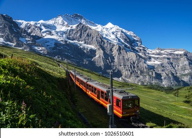 A tourist train traveling on the railway from Kleine Scheidegg to Jungfraujoch(Top of Europe) & wild flowers blooming on a green grassy hillside under blue sunny sky in Bernese Oberland, Switzerland
