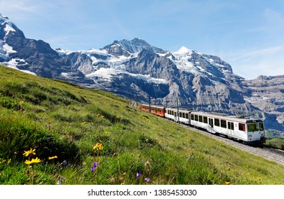 A tourist train travels on Jungfrau Railway from Kleine Scheidegg to Jungfraujoch under blue clear sky & wild flowers bloom on a grassy hillside under rocky mountains in Bernese Highlands, Switzerland