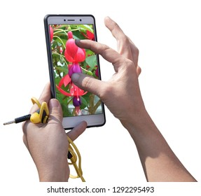 Tourist using a smart phone to taking pictures of flower Fuchsia. White background