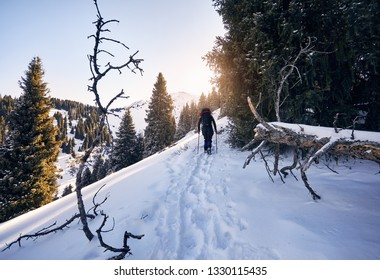 Tourist with walking on the snow trail in the mountains in the forest