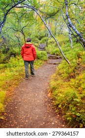 Tourist is walking through the forest on the bottom of Asbyrgi Canyon in Northern Iceland