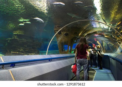 tourist watching with interest on  fish in oceanarium tunnel. Saint Petersburge, Russia - September 17, 2018.
