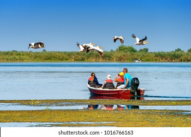 Tourist watching the Pelican Birds wildlife fauna in the Danube Delta