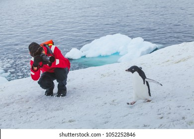 tourist wildlife photographer taking photo of bird adelie penguin in Antarctica