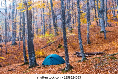 touristic camp among the quiet red autumn forest