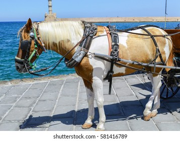 Touristic horse in the main square in city of Chania Crete, Greece. Small mountain horse harnessed in carriage is waiting tourists for next ride around old city.Beautiful small horse ready for a ride.