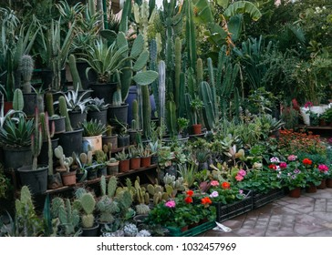Touristic shop in Morocco with cactuses