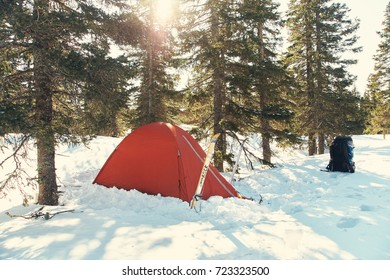 touristic tent in winter firry forest in ski tour