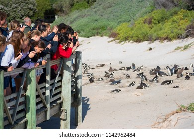 Tourists at the african penguin colony. Boulders Beach, South Africa. 20 July 2018
