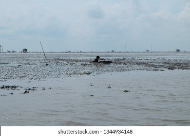 Tourists collect cockles in mud slides, the estuary of Thailand. Learn the way of life of fishermen farmers is considered Unseen of tourism.