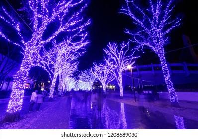 Tourists enjoy the illumination display for Christmas season & New Year in Ao No Dokutsu, with trees decorated in bluish purple lights along a pedestrian promenade in Yoyogi Park, Shibuya, Tokyo Japan