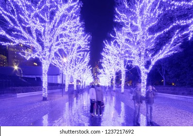 Tourists enjoy the illumination display for Christmas season & New Year in Ao No Dokutsu, with trees decorated in bluish purple lights along a pedestrian promenade in Yoyogi Park, Shibuya, Tokyo Japan
