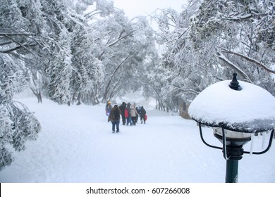 Tourists enjoy skiing and snowboarding activities in winter cold day with landscape of trees, road with snow at Mount Buller,a resort village in eastern Victoria, Australia. Selective focus.