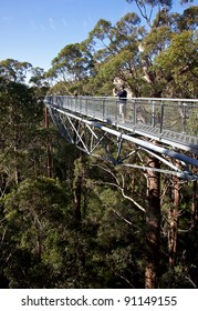 Tourists enjoying the Tree Top Walk in the Valley of the Giants, Walpole-Nornalup National Park, near Walpole, Western Australia