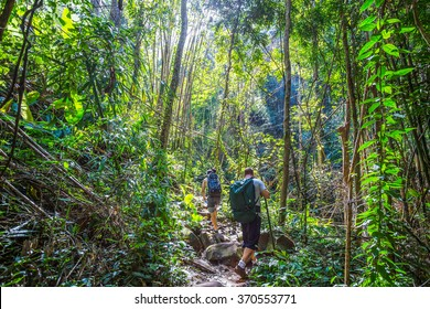 Tourists hiking in the deep jungle , Thailand