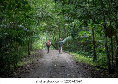 Tourists hiking in Gamboa rainforest, Panama