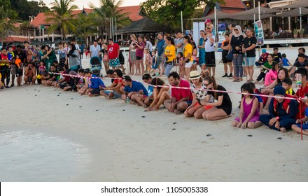 Tourists kneeling on the beach and releasing little cute green sea turtle (Chelonia mydas) hatchlings which instinctively head directly into the sea. Taken in April 2017 on Redang Island, Malaysia.
