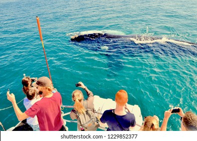 Tourists on board whale watching ship taking photo of mother whale and white calf in water off the waters of Walker Bay near Hermanus, Cape Overberg, South Africa. November 2018