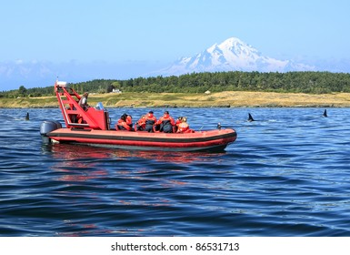 Tourists on inflatable red to a motor boat, observing of orcas swimming in an ocean gulf