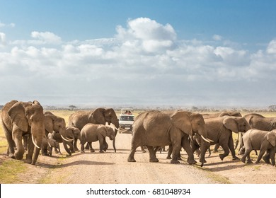 Tourists on safari watching and taking photos of big hird of wild elephants crossing dirt roadi in Amboseli national park, Kenya. Peak of Mount Kilimanjaro in clouds in background.