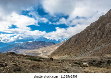 Tourists on the trail around Annapurna in the vicinity of the village Muktinath, Nepal.
