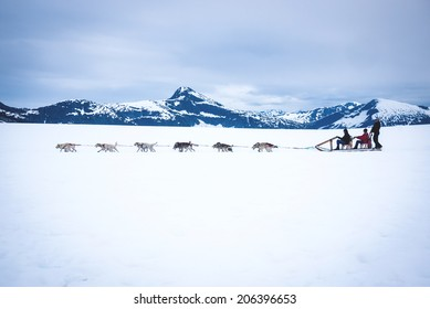 Tourists are pulled by a dog sled along the Mendenhall Glacier in Alaska just outside Juneau.