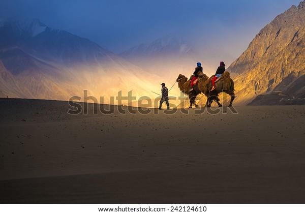 Des touristes font le safari à dos de chameau dans la vallée de Nubra à Leh Ladakh, Inde