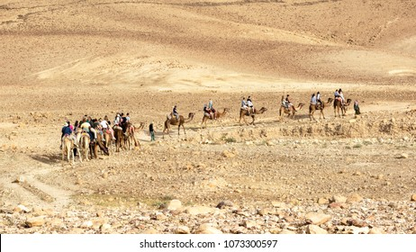 tourists riding camels in a caravan in the negev desert near Arad in Israel