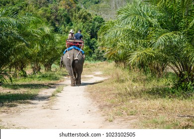 Tourists are riding an elephant in tropical green fields with palms trees in Thailand