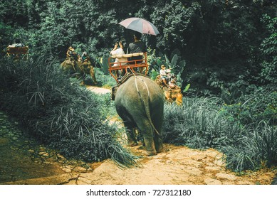 Tourists riding elephants through jungle in Phuket, Scenery of phuket island,  Travel in Thailand, Summer and vacation trip