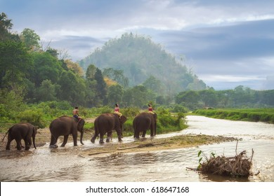 Tourists riding on elephants trekking in Thailand